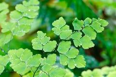 okładkowe paprociowe lasowe zmielone naturalne rośliny Obraz Royalty Free