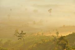 okładkowy mgły ranek góry drzewo Obraz Stock