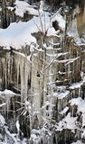 okładkowa zima Fotografia Royalty Free