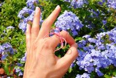 OK de main gauche Photo stock