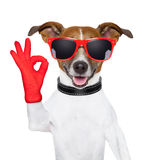 Ok fingers dog royalty free stock photography