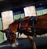 Ok på en häst som drar en vagn Arkivbild