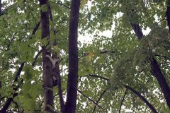Okaleczający kot na drzewie Obraz Stock