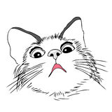Okaleczający, zmartwiony kot, Fotografia Royalty Free