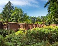 Okammad trädgård Royaltyfri Fotografi