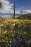 Okanagan Lake in Spring Stock Photos