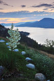 Okanagan lake at sunrise Royalty Free Stock Photography