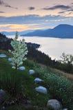 Okanagan lake at sunrise Royalty Free Stock Photography