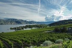 Okanagan regionGreen Bay för vingård Arkivfoto