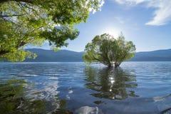 Okanagan Seeüberschwemmung Lizenzfreies Stockfoto
