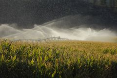 Okanagan Valley Corn Field Irrigation Stock Photography