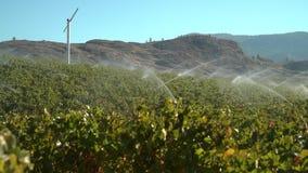 Okanagan Vineyard Irrigation BC, 4K UHD stock footage