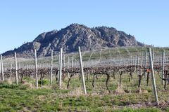 Okanagan Vineyard Spring View Royalty Free Stock Photo