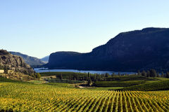 Okanagan Vineyard Winery British Columbia. Vineyard in Okanagan Falls, British Columbia, Canada with Vaseux Lake and McIntyre Bluff in the background. McIntyre Stock Photos