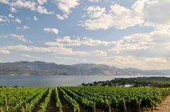 okanagan vingård för lake Arkivfoto