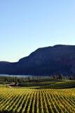 Okanagan winnicy wytwórnii win kolumbiowie brytyjska Fotografia Stock