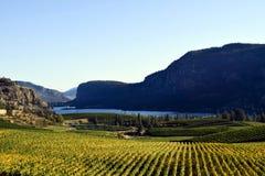 Okanagan winnicy wytwórnii win kolumbiowie brytyjska Zdjęcia Stock