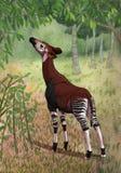 Okapi en bosque Imagenes de archivo