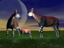 Okapi family - 3D render Stock Image
