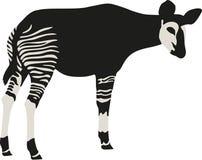 Okapi vector illustration