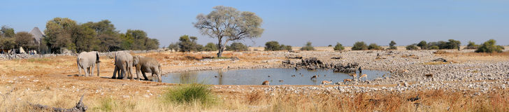 Okaukeujo waterhole panorama 2 Royalty Free Stock Images