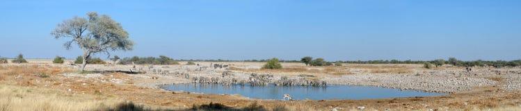Okaukeujo waterhole panorama 3 Royalty Free Stock Photo