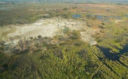 Okavango三角洲 免版税库存照片