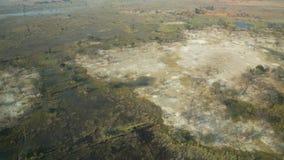 Okavango三角洲 免版税库存图片