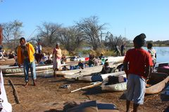 Okavango Delta Royalty Free Stock Image