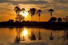 Okavango delta Royaltyfria Bilder