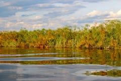 Okavango delta Royaltyfria Foton