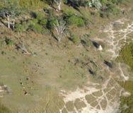Okavango Delta. Aerial view of the Okavango Delta in Botswana, Africa Royalty Free Stock Images
