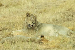Okavango-Delta Botswana, Afrika Lizenzfreies Stockfoto