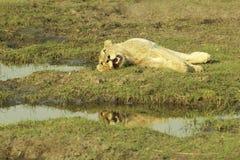 Okavango-Delta Botswana, Afrika Lizenzfreies Stockbild