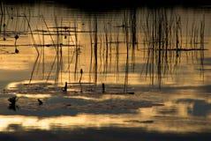 Okavango delta in botswana Royalty Free Stock Photos
