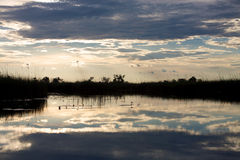 Okavango delta in botswana Royalty Free Stock Photo