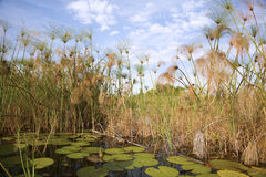 Okavango Delta Stock Photography