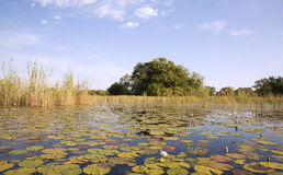 Okavango Delta Royalty Free Stock Images