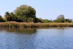 Okavango Delta Landscape. Botswana Stock Photography