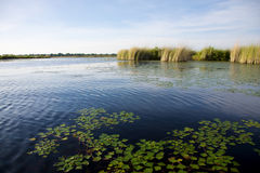 Okavango delta Royalty Free Stock Photos