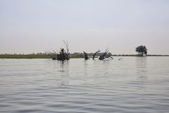 Okavango delta is one of the Seven Natural Wonders of Africa Botswana. South-Western Africa royalty free stock photo