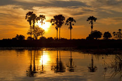 Okavango Delta. Sunset about the Okavango delta in Botswana Royalty Free Stock Images