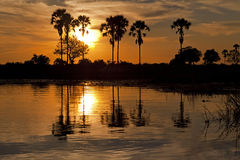 Okavango Delta Stock Image