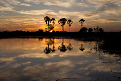 Okavango Delta. Sunset about the Okavango delta in Botswana Stock Images