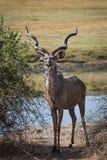 Okavango-Delta von Botswana, Afrika Lizenzfreie Stockbilder