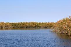 Okavango Delta water and Royalty Free Stock Photos