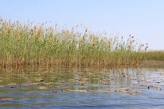 Okavango Delta water and Stock Images