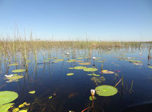 Okavango Delta Stock Photos