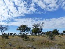Okavango deltalandskap i vintern, Botswana Royaltyfri Bild