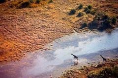 Okavango Dreieck Lizenzfreies Stockbild